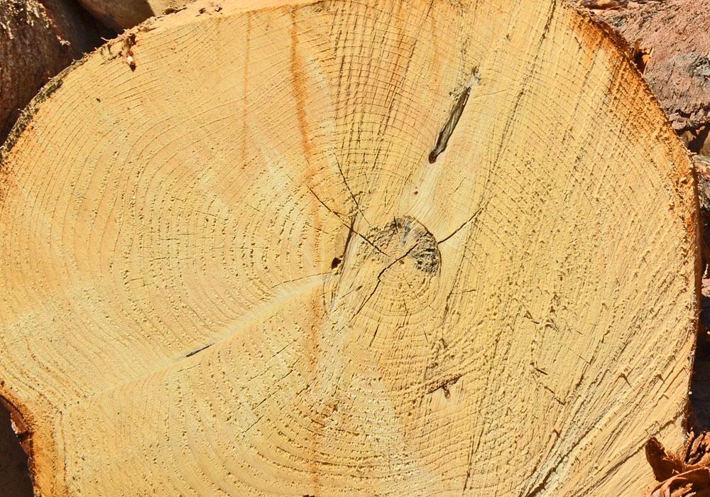 Rohstoff Holz