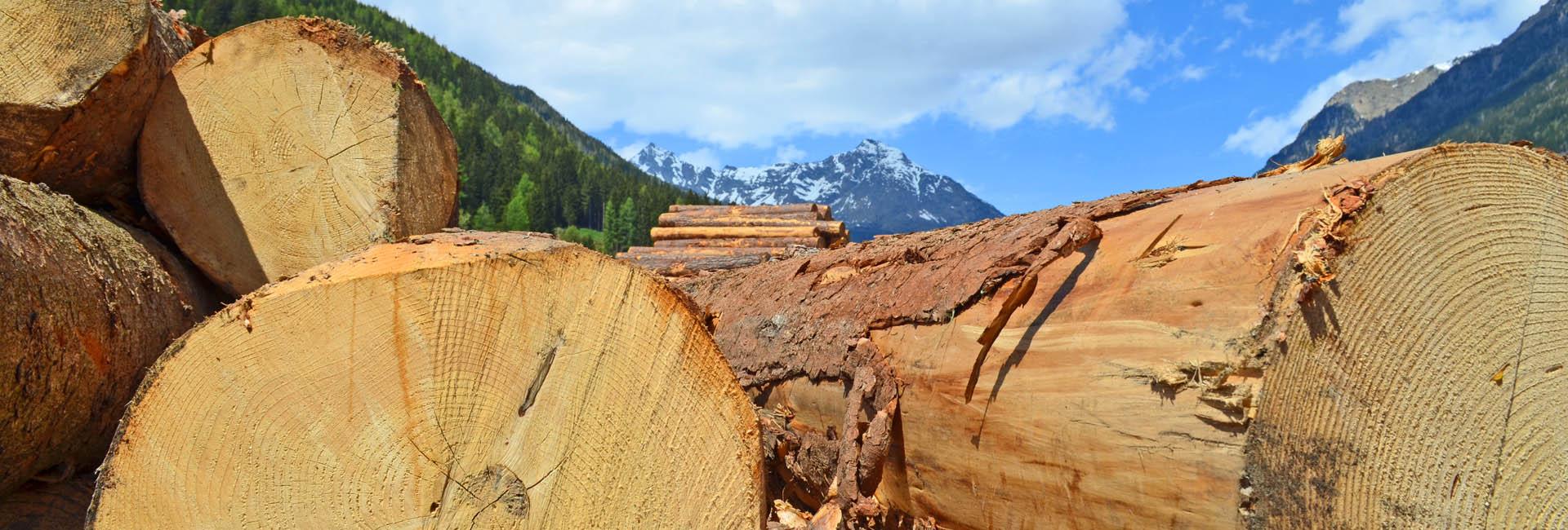 Rohstoff Holz aus der Region